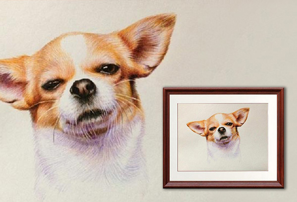 Color Pencil Dog Portrait