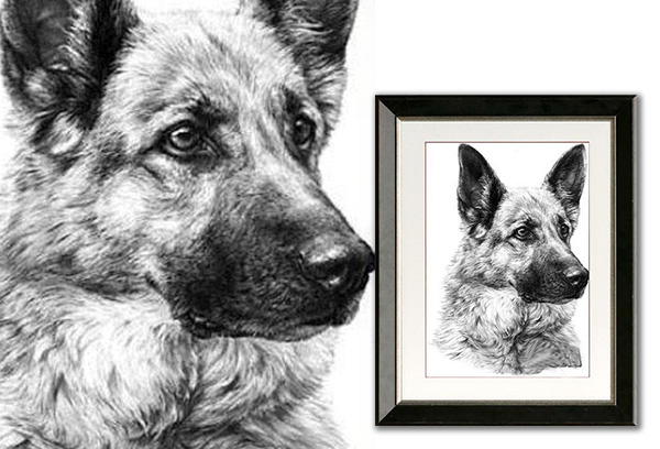 Charcoal Sketch Dog Portrait