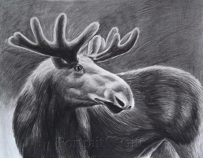 Deer Pencil Sketch