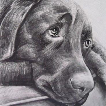 Dog Pencil Drawing Portrait