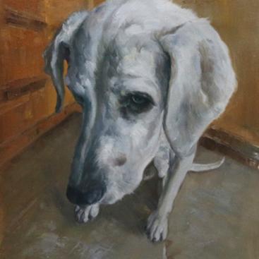 Cute White Dog Portrait