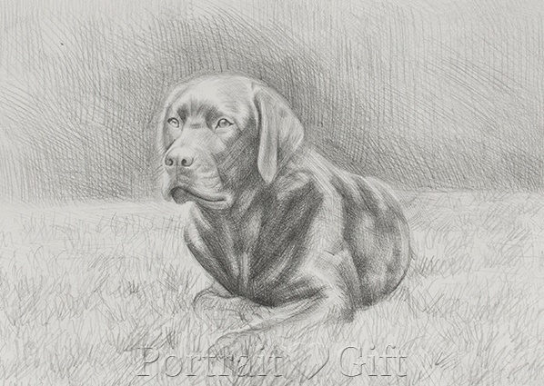 Dog Playing on Grassland