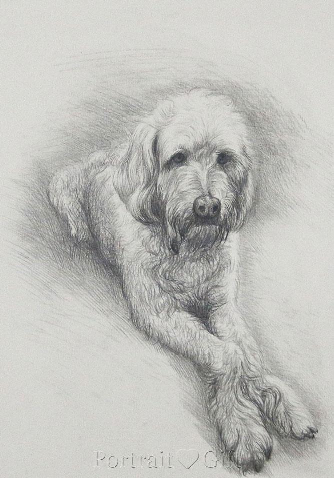 My Cute Dog Portrait